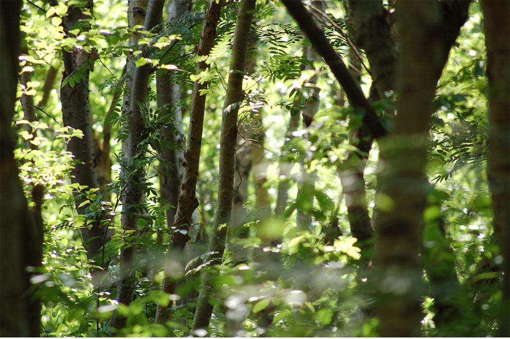 Echte Wildnis Auf Dem Darß – Wo Natur Natur Sein Darf