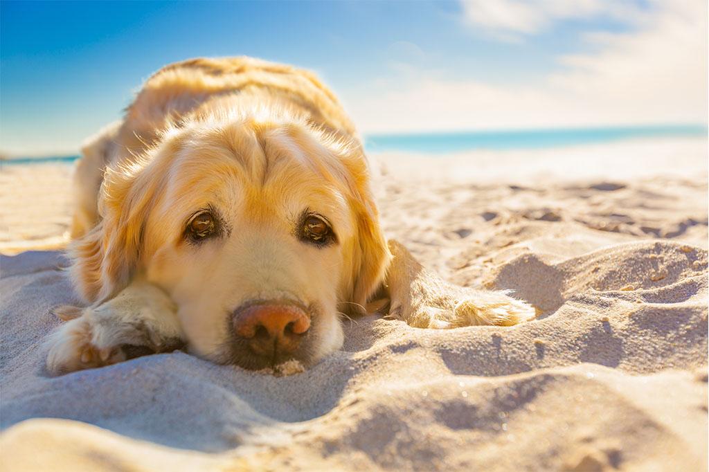 Ostsee Urlaub Mit Hund – Darauf Sollten Sie Auf Dem Darß Achten